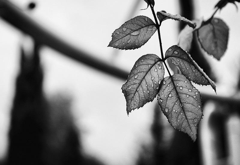 azienda-agricola-san-ruggiero-foglie-800